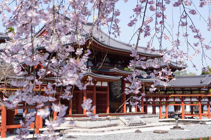 夜行バスで行った春の京都 2021